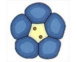 2222 blue flower thumb155 crop