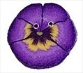 """Tiny Purple Pansy 2223t handmade clay button .37"""" JABC Just Another Button C"""
