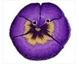 2223t purple pansy thumb155 crop