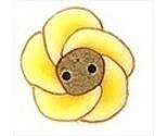 2231 buttercup thumb155 crop