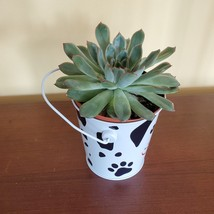 """Echeveria Succulent in Tin Bucket with Dog Face, 4"""" live plant in animal planter image 5"""