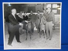 8x10 Vintage Horse Photograph Old Show Portrait Race B&W Print Racing Ba... - $12.99