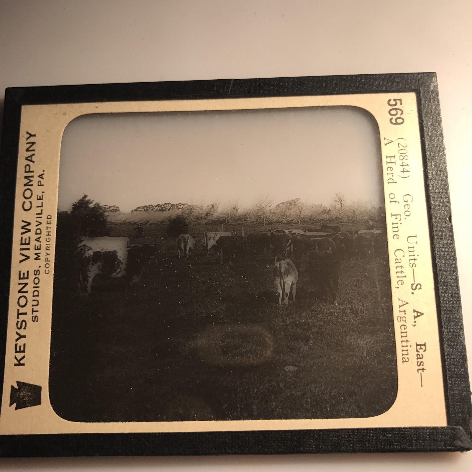 Vtg Keystone Magic Lantern Glass Slide Photo Herd Of Cattle Argentina