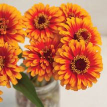 Zowie!™ Yellow Flame Zinnia Seed Flower Seeds Annual Flower Seeds - $8.99