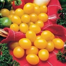 100 seeds Ildi Tomato Seeds, Fabulous Sweet-tart Bite Golden Yellow Cher... - $12.08