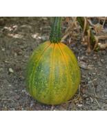 6 Variety Seeds - Tatume Summer Mexican Squash Calabacita Seeds #IMA59 - $12.50+