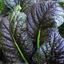 Mustard Greens Red Giant (250 Seeds) - $4.72