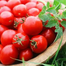 SHIP FROM US SWEET CHELSEA TOMATO - 2 g PACKET ~540 SEEDS - NON-GMO, HYB... - $16.96