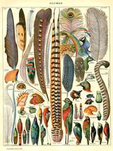 5941.Decoration Poster.Feathers.Plumes.argus.goura.hibou.variety.birds.W... - $11.30+