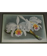 Lindenia Print Limited Edition Cattleya Mossiae Warocqueana Orchid Colle... - $14.24