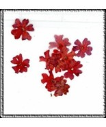 Elegant  Real  DRIED FLOWERS  AUTUMN #G - $4.85