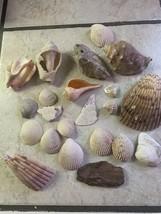 Conch Shells Pink Peach Blue Sea Nautical Beach Home Decor Lot Craft - $18.65