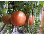 c 1ur9  wk   kgrhqr  lyez 44zglkbnettddpfq   3 thumb155 crop