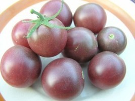 Black Cherry tomato - blight-resistant, great flavor - $4.05