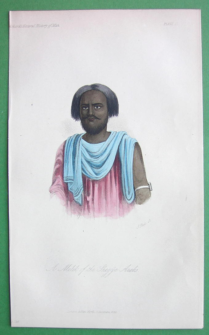 ARAB Chief Melik of Shagya Race - 1855 H/C Color Antique Print