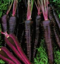30 Seeds Purple Carrot Seeds Daucus Carota Delicious Vegetable Seeds C151 - $13.58