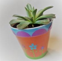 """Echeveria Succulent in Flower Design Pot, Live Plant, 4"""" Colorful Planter image 3"""