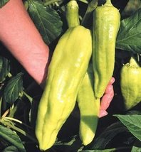 30 Seeds of Giant Aconcagua - Sweet Peppers - $16.04