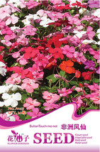 20 seeds / pack, Impatiens Walleriana Tempo Wedgewood Mix Seeds Garden ... - $6.73