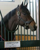 COLOR PHOTO -LEADING SIRE- CONSTITUTION   at Winstar Farm #4 - $8.00+