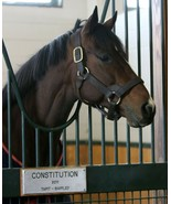 COLOR PHOTO -LEADING SIRE- CONSTITUTION   at Winstar Farm #4 - $8.00+