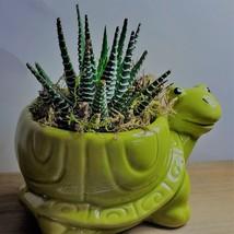 "Succulent in Ceramic Turtle Pot Live Haworthia Zebra Plant 5"" Green Planter image 5"