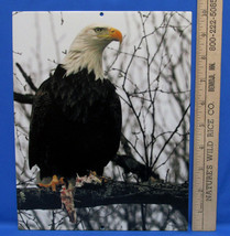 Mark Lewer Photograph Picture Bald Eagle Printed on Metal Wall Hanging B... - $19.79