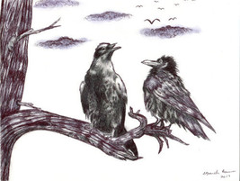 black bird crow raven pigeon pen drawing original art animal nature illu... - $19.99