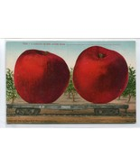 Exaggeration Red Apples SP Railroad Car Exaggerated 1910c postcard - $6.93