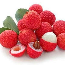Fruit seeds Red Litchi, Lychee, Lychee Seeds Fresh (5 Seeds), DIY Home G... - $6.29