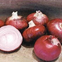 1/2 Oz Seeds of Desert Sunrise Onion - $51.38