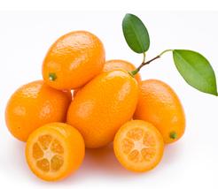 100pcs Golden Orange Cumquats Kinkan Seeds, Very Tasty Edible Fruits IMA1 - $16.99