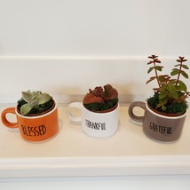Succulents in Espresso Mug Planters, Set of 3, ceramic Thankful Grateful Blessed image 2