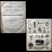 1855 Analytical Class-Book of Botany 1st Ed. En... - $30.00