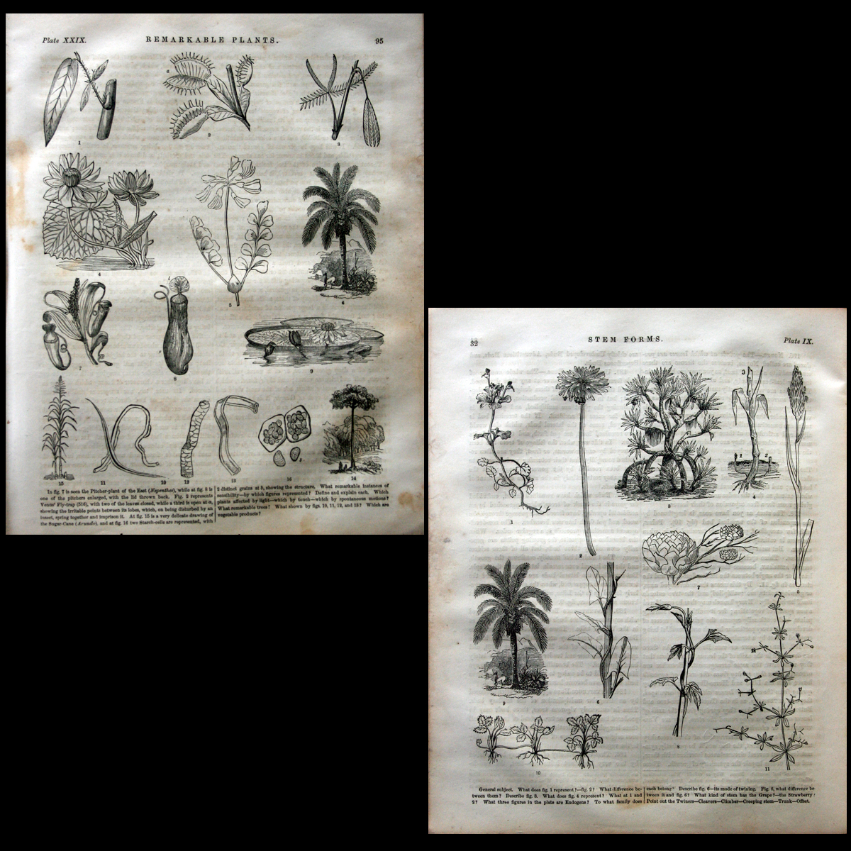 1855 Analytical Class-Book of Botany 1st Ed. Engraved Illust