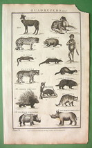 QUADRUPEDS Mammals Chimpanzee Panther Porcupine etc - 1788 Folio Antique... - $22.46