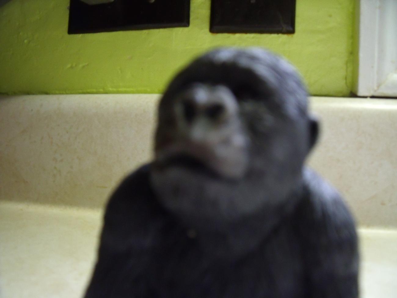 Sandicast Small Gorilla No.  4004 from 1994