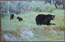 1950's PC Mother Black Bear and Cubs View, BC - $2.50