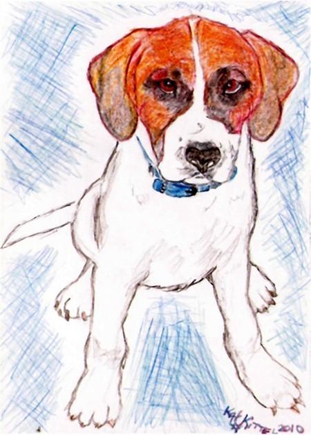 8x10 Custom Pet Dog Puppy Portraits Kat-Renee Kittel
