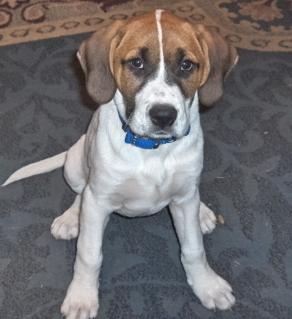 8x10 Custom Pet Dog Puppy Portraits Kat-Renee Kittel image 2