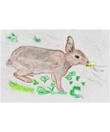 8x10 Custom Pet Bunny Rabbit Portraits Kat-Renee Kittel - $20.00