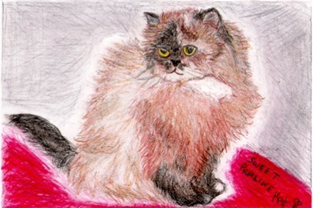 8x10 Custom Pet Cat Kitten Portraits Kat-Renee Kittel image 4