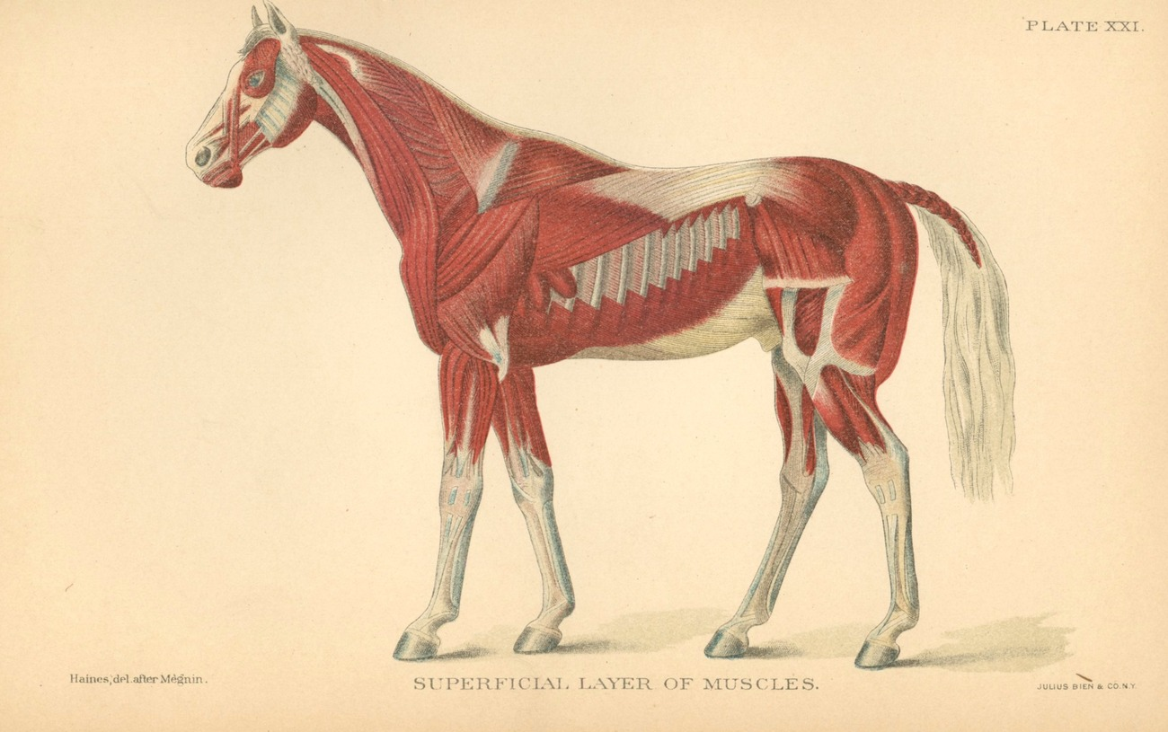 Primary image for Special Report Diseases Horses book 1903 US Dept Agric medicine veterinary