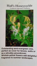 Hall's Honeysuckle 1 Gal. size Plant Vine Shrub Flowers Garden Landscaping Vines - $34.60