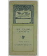 Forest Trees of Massachusetts A pocket Manual book 1907 Clark  - $9.00