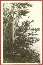 Kalkaska MI Boardman River Trees RPPC Postcard BJs - $10.00
