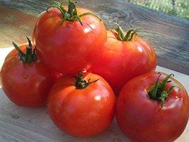 25 Seeds of Oregon Spring Tomato - Lycopersicon Lycopersicon - $21.09