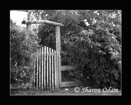 Primary image for The Garden Gate - Fine Art Print - MS0068BW