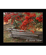 Old Time Wooden Fence - Fine Art Print - MS0070C - $17.50