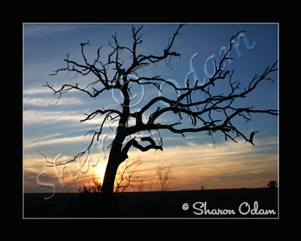 Texas Sunset - MS0028C - Fine Art Print